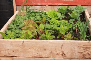 How To Grow Food In A Small Place