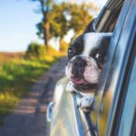 Summer Travel Pet Tips