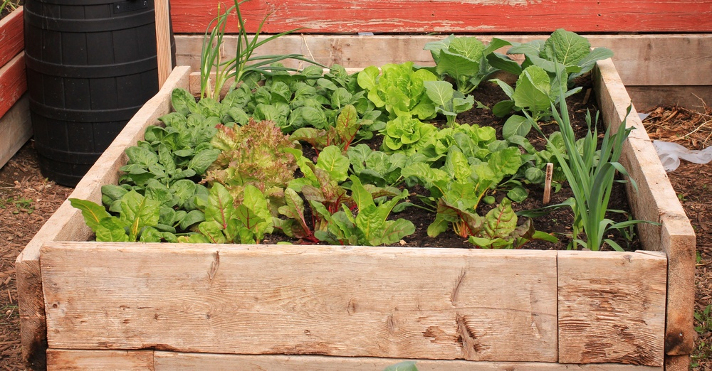 grow food in small place