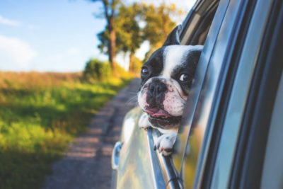 how to travel and pcs with pets